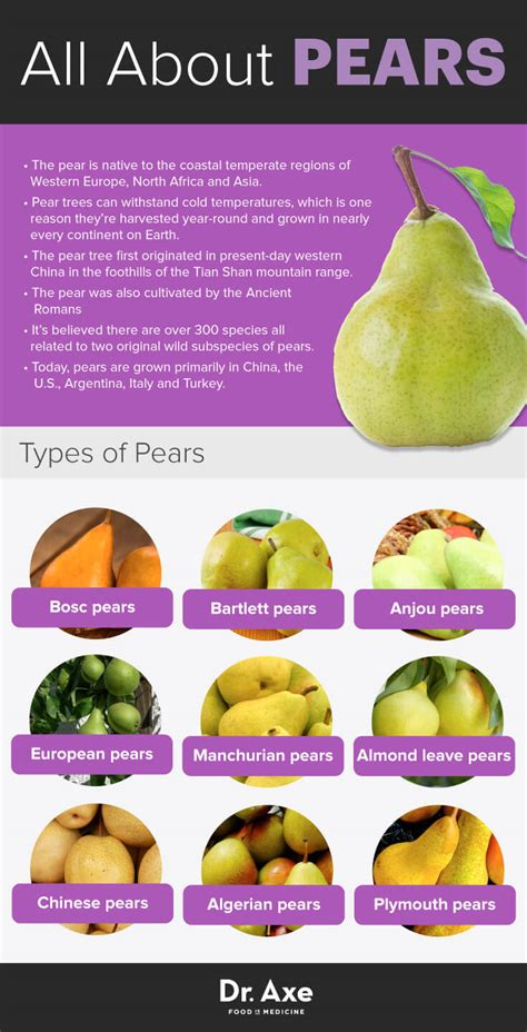 asian pear nutritional information jpg 735x1440