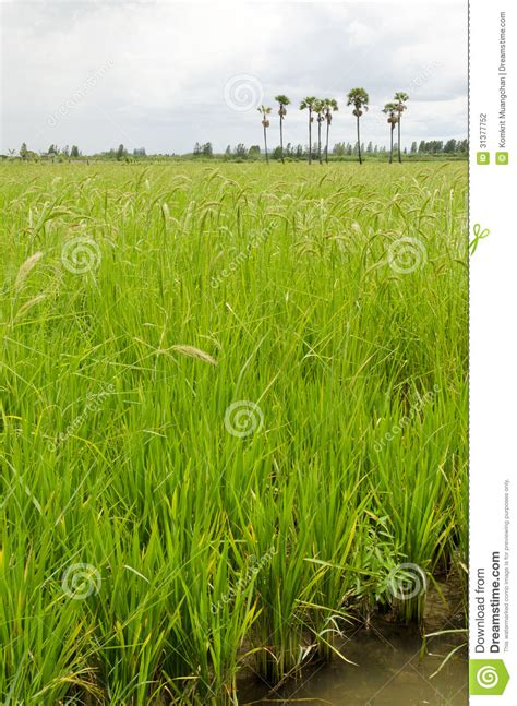 Rice farming business plan jpg 952x1300